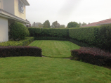 Rukuhia Homestead Landscaping - low maintenance garden
