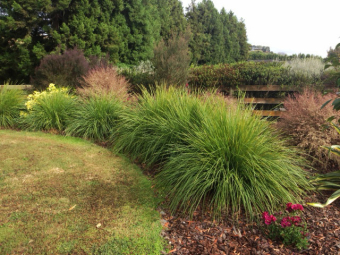 New ornamental grasses are extremely effective in the for Landscaping courses nz