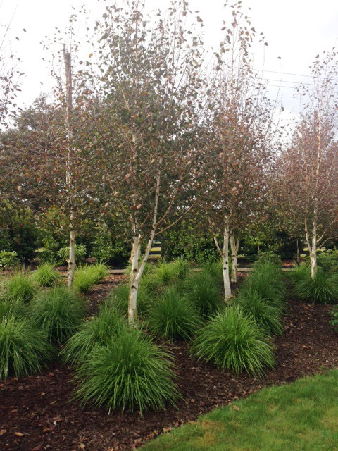 Landscaping Gallery Photos Rukuhia Homestead Landscaping