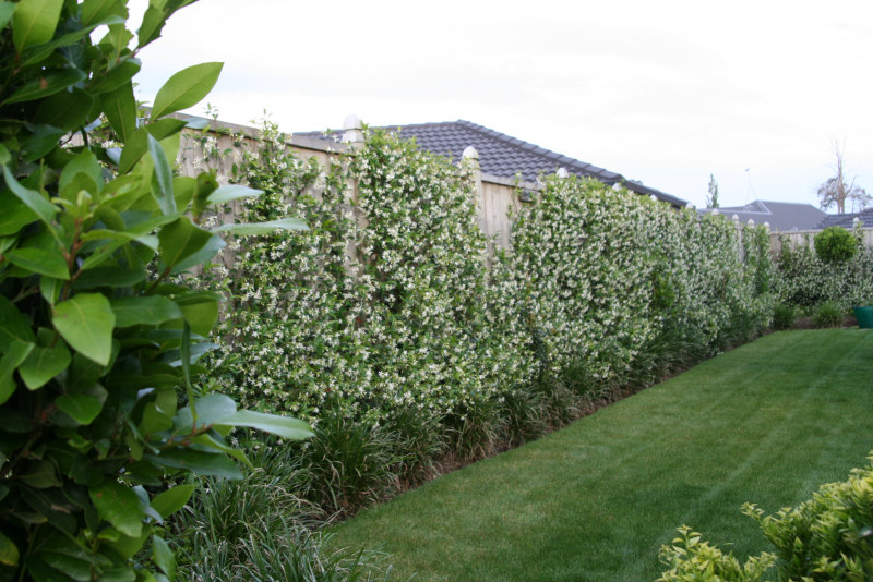 May 2012 - Colour My Garden Green and White - Rukuhia Homestead ...