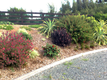Nz Grasses For Landscaping Planting a dry bank with plants so it will look beautiful and hi everyone we know everyones gardens are currently lacking moisture and some plants are looking rather poor for it workwithnaturefo