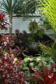 A Tropical garden with plenty of foliage colours and form can make you feel like you are really in the Pacific Islands